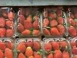 Fresh straw berry - photo 1