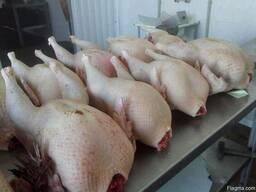 Turkey turkey meat - photo 2