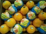 Апельсин - фото 5