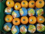 Апельсин - фото 8