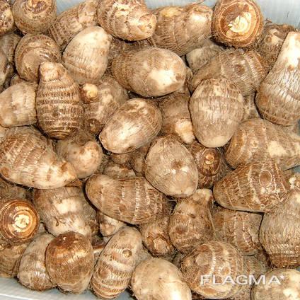 China best fresh taro