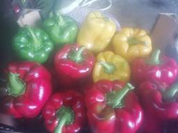 Fresh Capsicum peper
