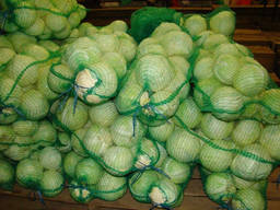 cabbage wholesale Kazakhstan - photo 2