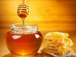 Поставки меда в Америку