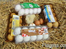 Transparent packaging for chicken and quail eggs for 6, 10, - photo 2
