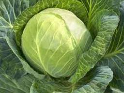 Wholesale fresh cabbage
